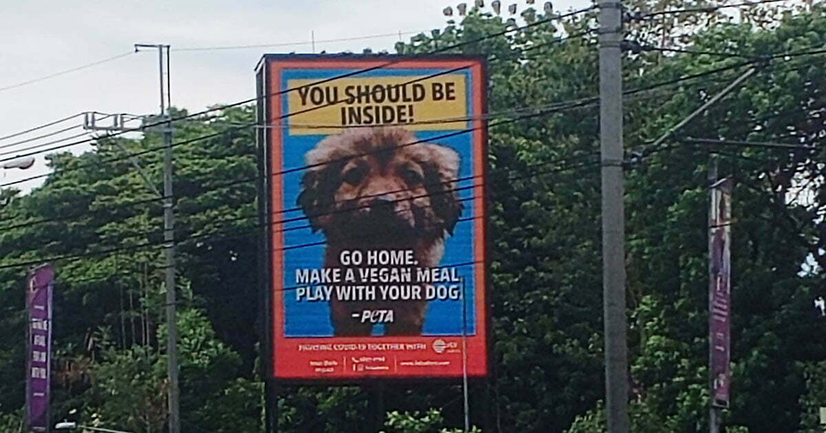 """PETA's """"You should be inside"""" billboard"""